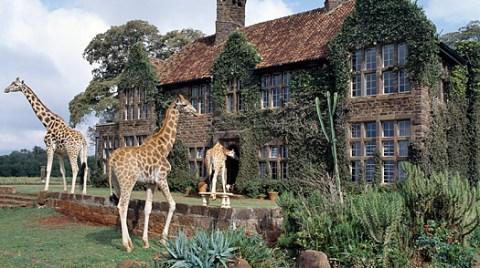 City safari in Nairobi